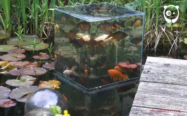 倒立的水族箱让小鱼从水上看外面的世界